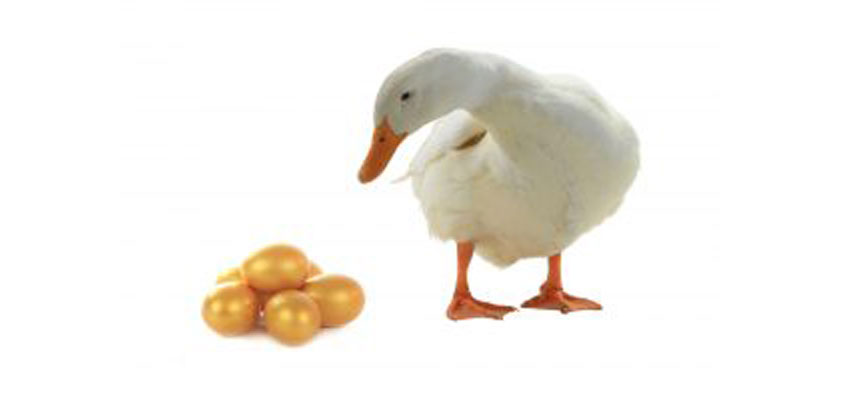 apple  the goose that lays the golden eggs